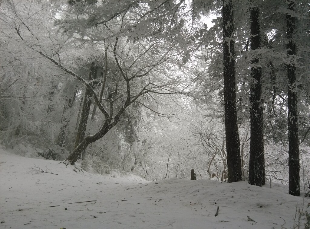 2月份的峨眉雪012