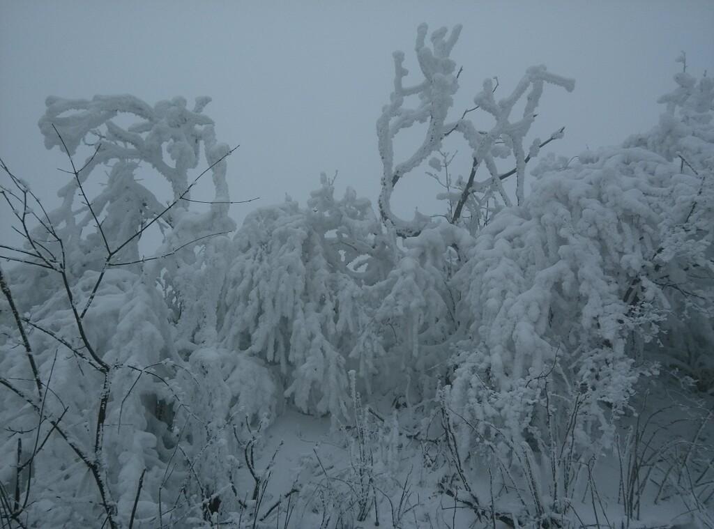 2月份的峨眉雪04